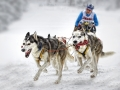 Ludwig Loch, Germany -Sledge dogs
